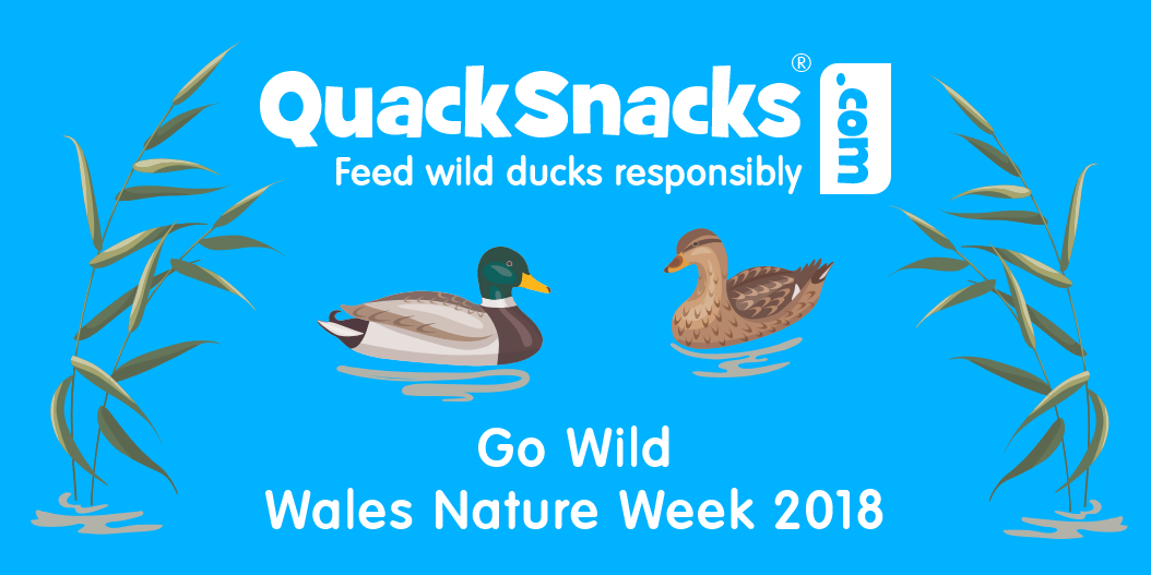 Go Wild - Wales Nature Week 2018
