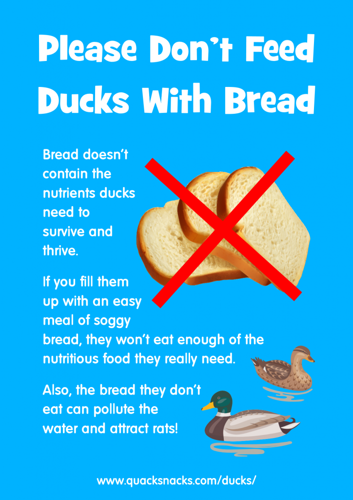 No Bread For Ducks